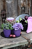 Globe thistles, hydrangeas and artichoke flower in violet ceramic pots and aubergines in enamel pan on old board door