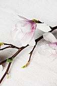 Close-up of magnolia flowers on twig lying on linen cloth