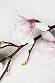 Nahaufnahme einer Magnolienblüte am Ast auf Leinen