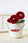 Bellis in dolls' house tin bucket used as vase in front of sideboard on cloth