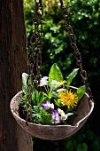 Verschiedene Frühlingskräuter und Blüten in einer aufgehängten Metallschale im Garten