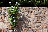 Flowers growing out of crack in wall
