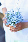 Hands holding forget-me-not flowers