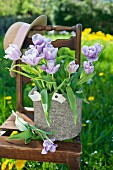 Purple tulips and hat on chair in garden