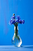 Cornflowers in carafe of water