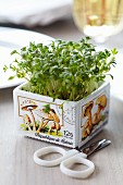 Pot of cress decorated with postage stamps with mushroom motifs