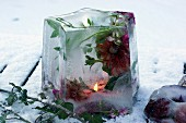 Ice lantern containing frozen flowers on snowy ground
