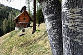 Small wooden cabin in woods, Val Sinestra, Graubuenden canton, Switzerland