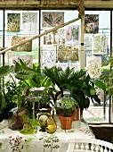 Blätter mit Botanik-Abbildungen an den Fenstern eines Gewächshauses und mit Glashauben arrangierte Topfpflanzen auf einem Tisch