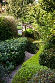 Enchanting, secretive gravel path surrounded by hedges and trees leading to garden gate