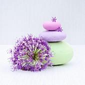 Pastellfarben bemalte Steine und eine Zierlauchblüte