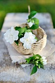 White jasmine flowers in small basket on garden table