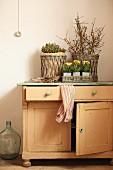 Primulas in small zinc pots on rustic cabinet