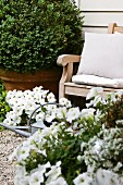 Garden chair, box ball, white flowers and watering can against house facade