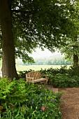 Wooden bench below tree in spacious gardens