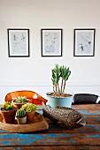 Topfpflanzen (Sukkulente, Kaktus) und Dekofisch auf Vintage Tisch mit abgeblätterter, blauer Farbe