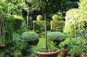 Sommergarten mit in Form geschnittenen Hecken und Pflanzen in Töpfen