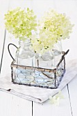 White hydrangea flowers in bottles of water in wire basket