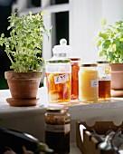 Küchenkäuter & eingelegte Früchte und Marmeladen in Gläsern auf Fensterbank