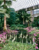 Atrium Garden with water and palm trees
