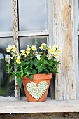 Yellow horned violets in terracotta pot decorated with heart motif made from peas