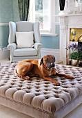 Hund auf gepolstertem Couchtisch vor hellem Lesesessel im traditionellen Wohnzimmer mit offenem Kamin