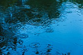 Raindrops falling on surface of water