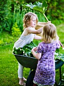 Girls harvesting rhubarb