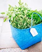 Fresh herbs in a blue basket.