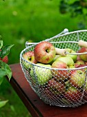 Apples in a basket.