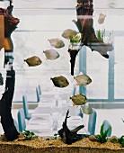 View of set tables through aquarium
