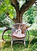 Hund auf Korbstuhl und angelehntem Fahrrad unter dem Baum