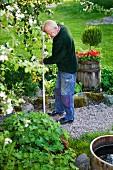 Älterer Mann beim Harken einer Kiesfläche unter blühendem Obstbaum