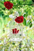 Vintage bird cage decorated with red roses hanging from tree