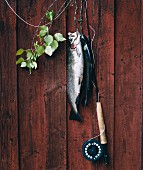Caught fish hanging on a wall.
