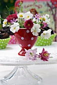 Spring flowers in red, polka-dotted egg cup