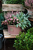 Autumnal planting in pink container on garden chair