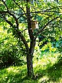 Nesting box for birds in tree