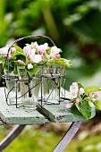 Obstblütenzweige in Glasgefässen auf Gartenstuhl