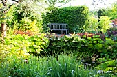Weathered garden bench against sunny hedge in lush, idyllic garden with pond