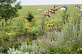 Herb garden edged by bamboo fence and ceramic ornaments; vegetable beds with cows on sloping pasture in background