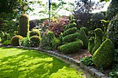 Artistic box topiary in English-style, manicured garden