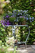 Arrangement mit lila blühenden Gartenpflanzen auf romantischem Gartentisch vor grüner Laubhecke