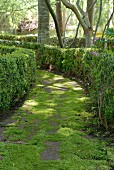 Mossy, green garden path lined with hedges