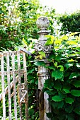 Rusty garden gate with hornbeam hedge growing over ornate post