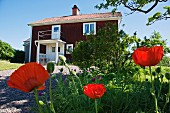 View past red poppies and gravel path to red, Swedish wooden house under a blue sky