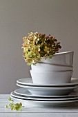 Stacked, white china crockery with dried hydrangea flower