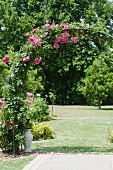 Pink roses growing over rose arch in extensive gardens