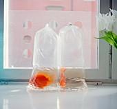 Gold fish in plastic bag, Sweden.
