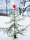 Schlichter Weihnachtsbaum mit leuchtend rotem Stern
